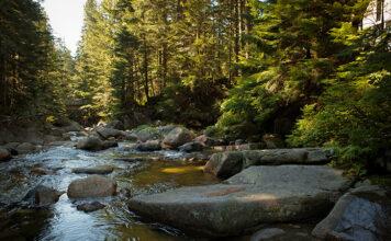 Spływ kajakowy - świetny sposób na urlop